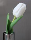 Белые-тюльпаны2