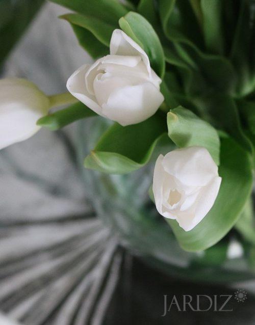 Белые-тюльпаны3