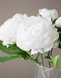 Белый-шоколад5