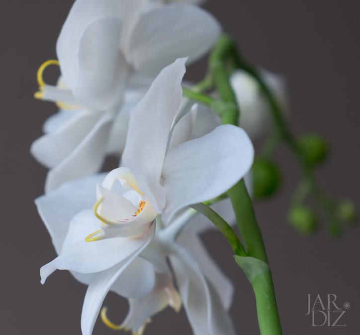 Орхидеи-для-Анны4