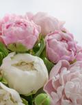 Розовое-бешенство