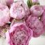 Розовое-бешенство4