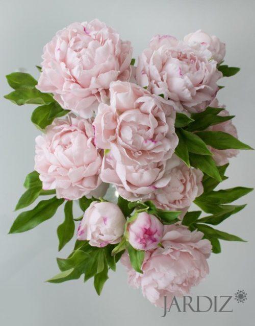 Розовые-пионы2
