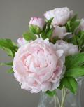 Розовые-пионы4