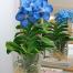 Синяя-орхидея-Ванда