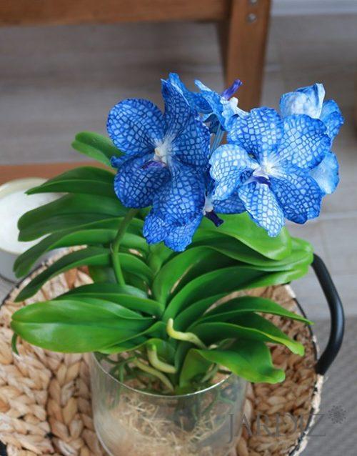 Синяя-орхидея-Ванда2