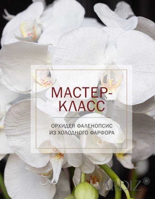 орхидеи-2020