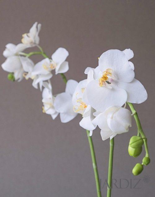 орхидеи3