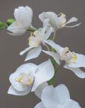 орхидеи4