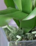 орхидеи5