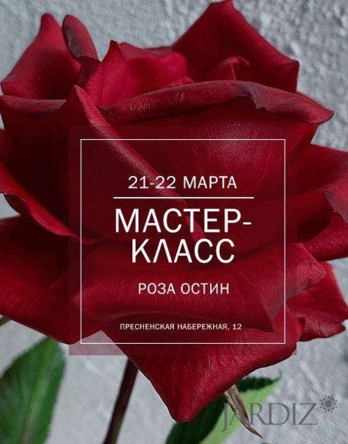 роза-бордо