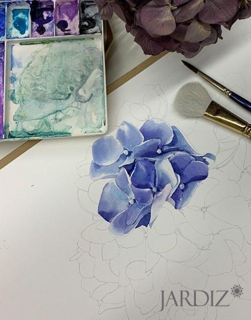 синяя-гортензия3