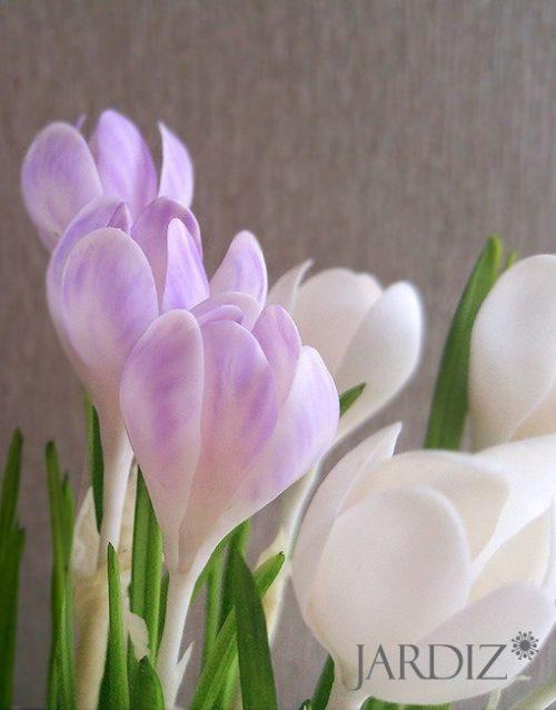 Крокусы «Предвестники весны»